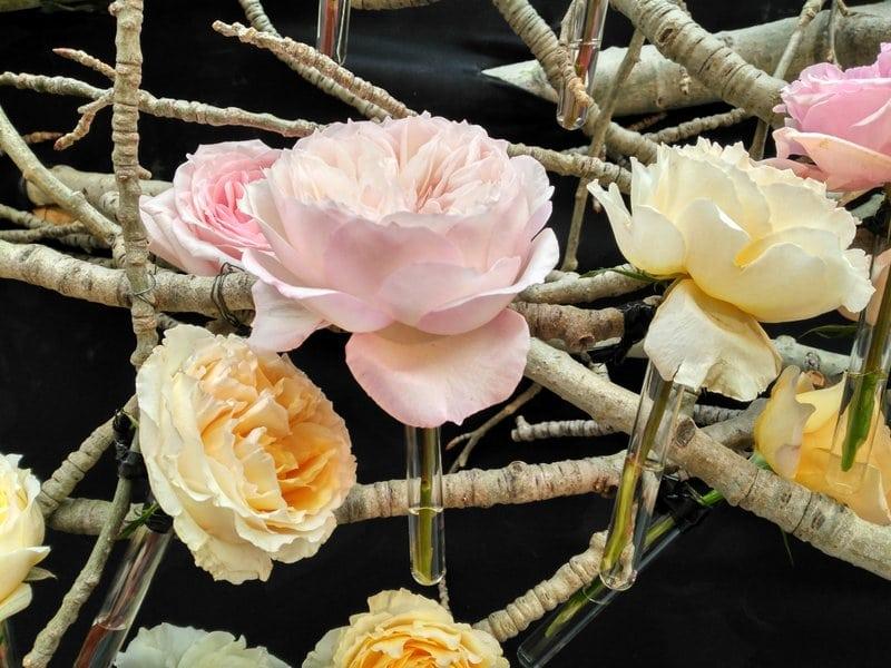 jose maria peiro flores