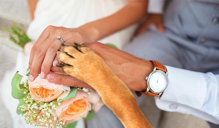 boda con mascota